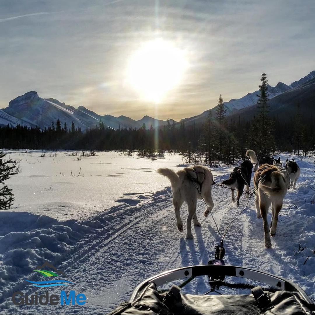 Dog sledding in the winter sun